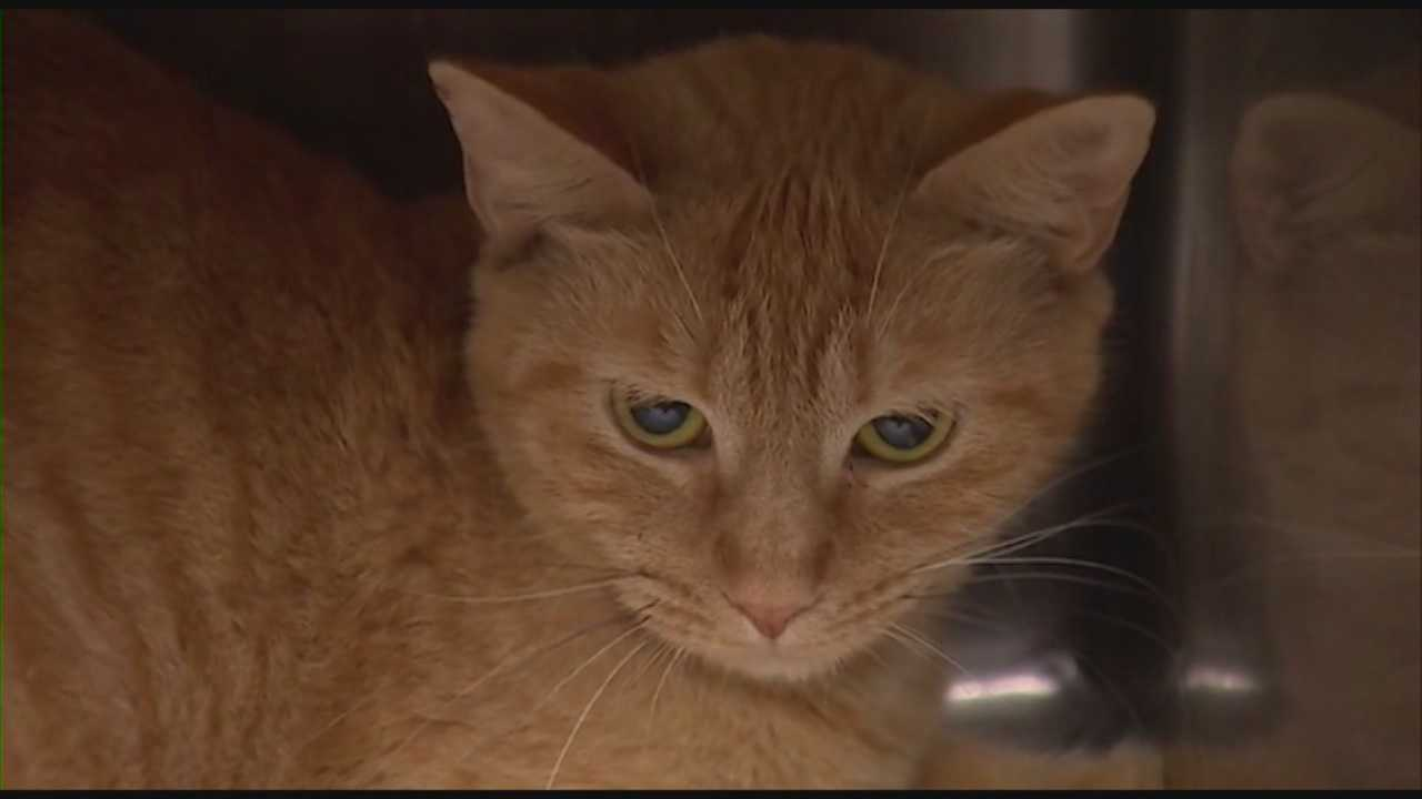 Cats found in Deltona home ready for adoption
