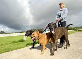 18. Nonfarm Animal Caretakers - 28.8% growth (+5,001 jobs) - $10.77