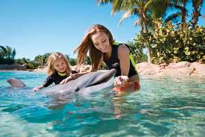 27. Take a swim with the dolphins at Discovery Cove.TIP: Leave your cash in your locker. Food and beverage is all-inclusive.