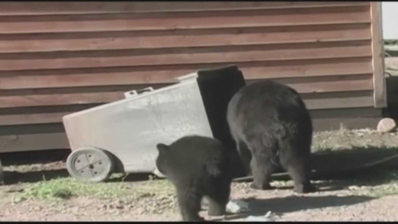 Seminole Co. neighborhood to require bear-proof trash cans