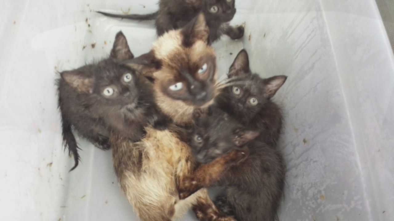 Man allegedly kept kittens in food storage container