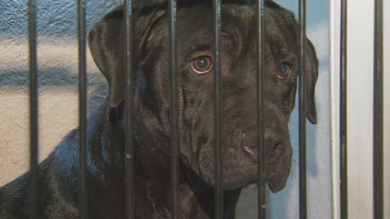 A 9-year-old boy was taken to Arnold Palmer Hospital after a dog attacked and bit him in the head.