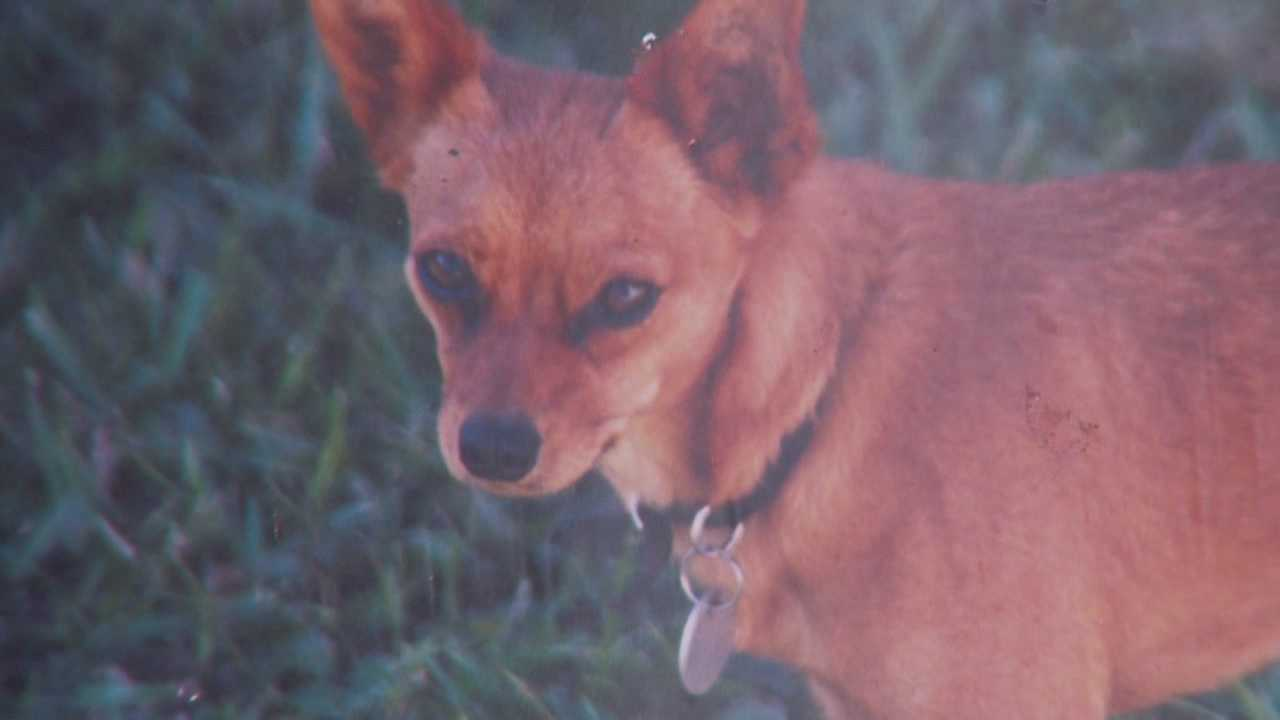 Dog killed in own yard when two dogs climb fence, attack