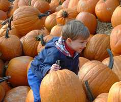 Fall is in the air, which means it's time to partake in some favorite fall activities, including pumpkin carving, hay rides and corn mazes. Here's a list of several Fall Festivals taking place in Central Florida.
