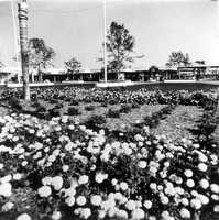 Flower beds at the Magic Kingdom in 1971
