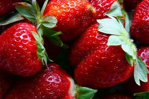 4. Florida Strawberry Festival When: Friday - Sunday, 10 a.m. - 10 p.m.  (Event continues through March 8)Where: 303 N. Lemon St., Plant City, FLCost: Advance: $8 adults and $4 children ages 6 to 12&#x3B; at the gate: $10 adults and $5 children, get advance ticket here.The festival will feature ethnic traditions, competitive contests, social events, entertainment and exhibits of agriculture, livestock, fine arts and more. There will also be a variety of desserts and dishes featuring strawberries.