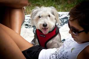 3. Bark and BrewWhen: Saturday 3 - 6 p.m.Where: Lake Eola, 512 East Washington St., Orlando, Fla. 32801Cost: $20What: Enjoy your favorite brews with man's best friend. Tickets includes 10 samples of craft beer, access to pet vendors, and live music by Gerry Williams Band. Three pet contest will be held at the event as well: best trick, best costume, and best owner dog look-a-like.