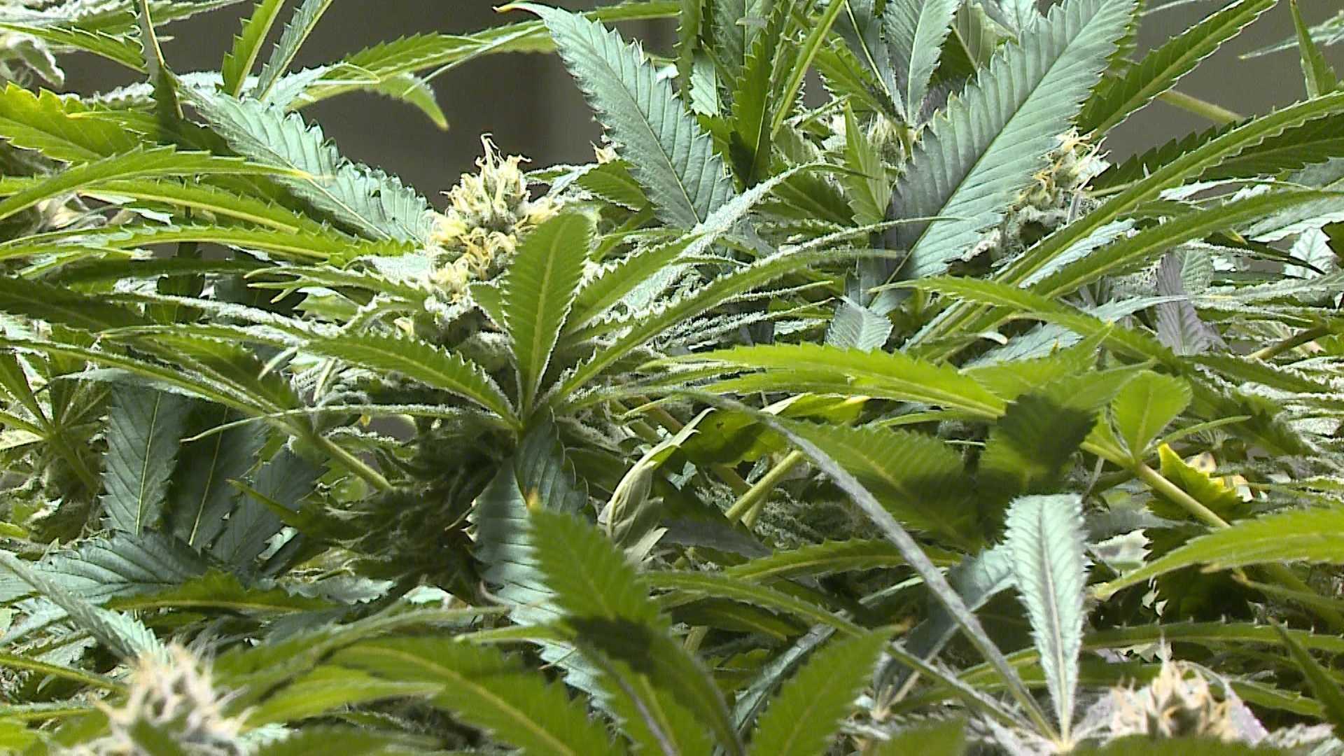 Weed2.jpg_highRes.jpg