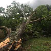 Tree falls Tavares