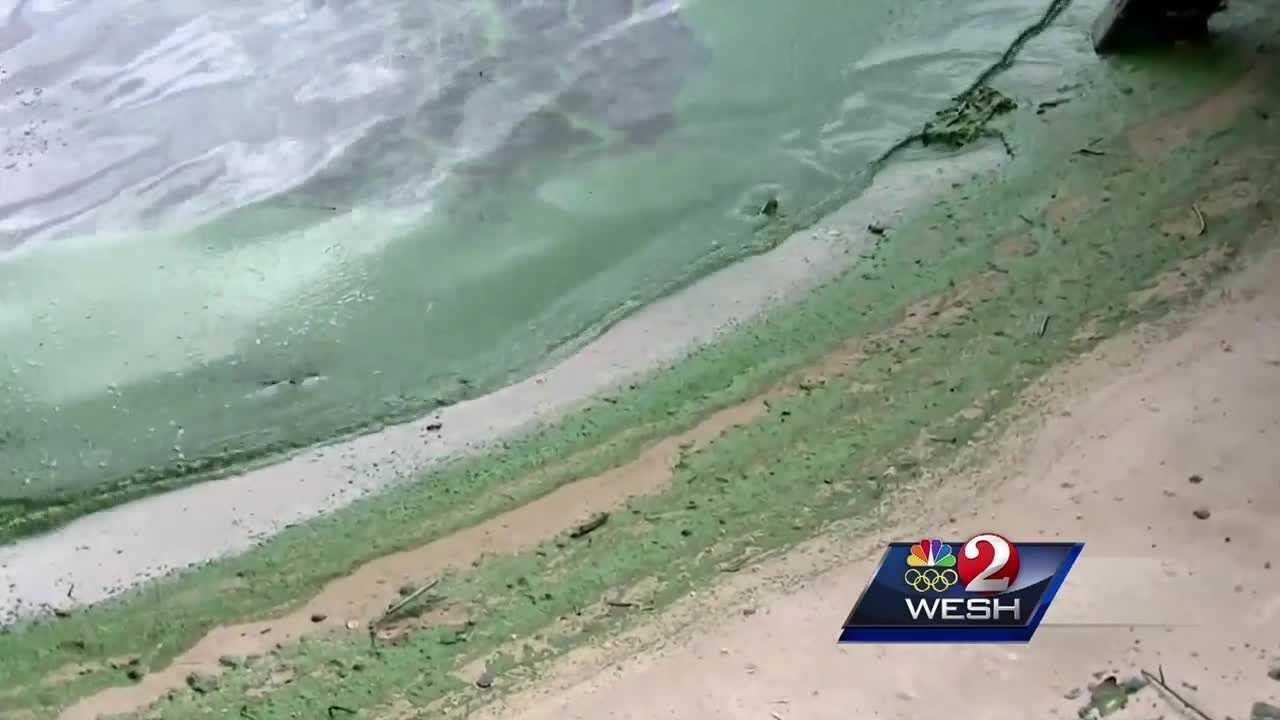Algae bloom causes some beaches to close