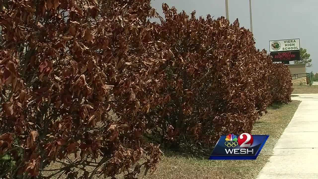 New water restrictions for Brevard County
