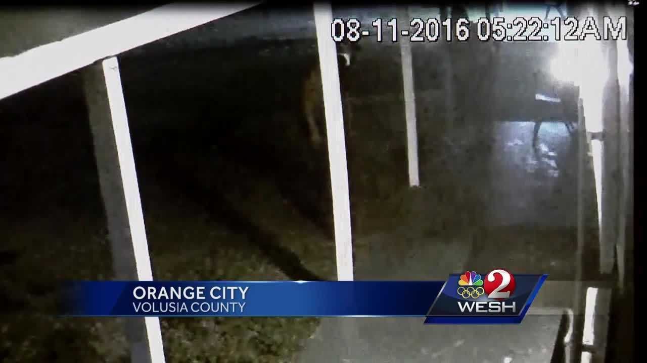 Thieves strike multiple businesses in Volusia County