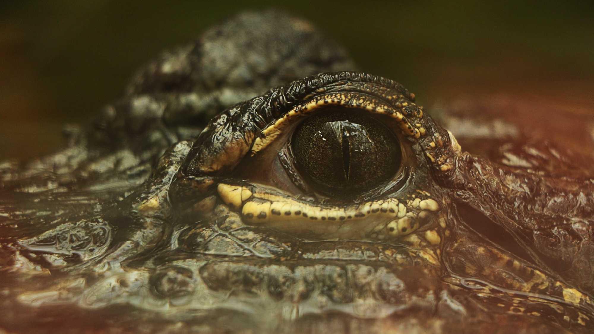 gator-eye.jpg