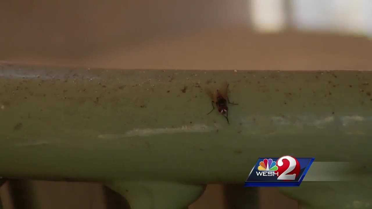 Florida community dealing with infestation of flies