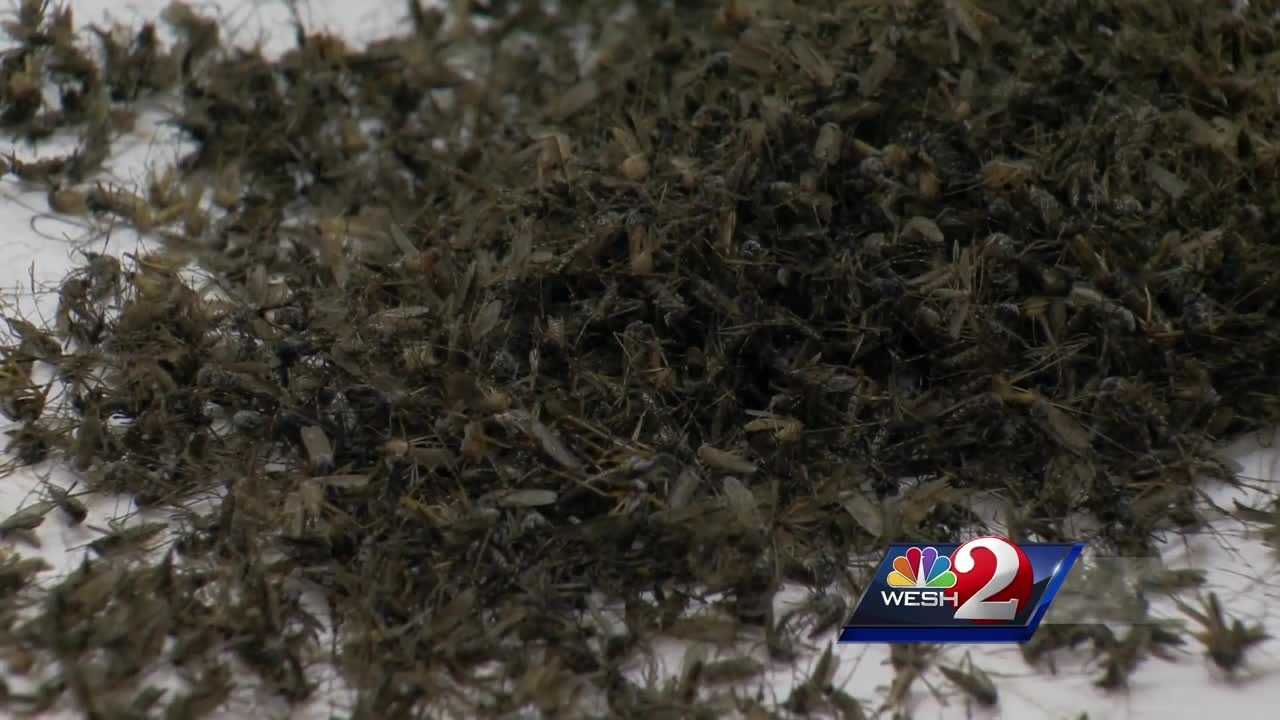 Aerial spraying planned for Osceola County this week