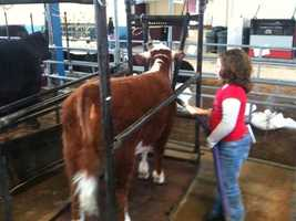The Animal Salon: It takes a lot of work to get the animals at the Farm Show ready to walk in front of a judge. Start in the North Hall and watch how the cattle get ready for their big moment. (Hint: it includes clippers, a blow dryer, and sometimes even hoof polish!)