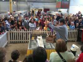 The Duck Show: Especially if you have children at the Farm Show, this is a can't-miss. Every day at 11am, 2pm, and 6pm the ducklings put on a show in the East Hall. Watch them waddle up a water slide and fall down the other side. It's a cuteness overload.