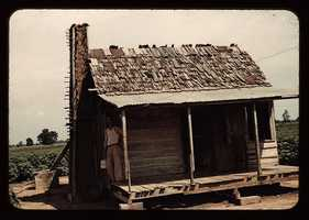 An old tenant house with a mud chimney and cotton growing up to its door, which is occupied by Mulattoes in Melrose, La. Marion Post Wolcott took this image in June 1940.