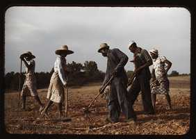 Chopping cotton on rented land near White Plains, Greene County, Ga. Photographer Jack Delano took this in June 1941.