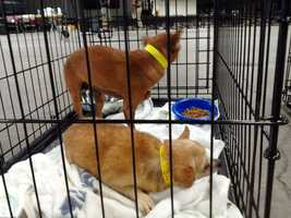 The dogs were then distributed to many area shelters. You can find a list of those here.