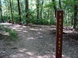 Holly Trail is 0.5-mile of easy walking and features native holly trees and Christmas ferns.