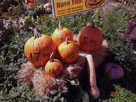 Pumpkin prices are the same as last year.