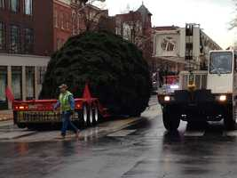 York's Christmas tree arrived in Continental Square Tuesday.