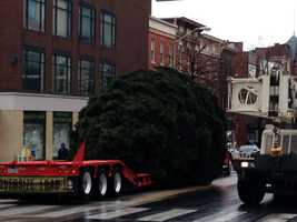 William Shaffer, of Dover, donated the 30-foot blue spruce.