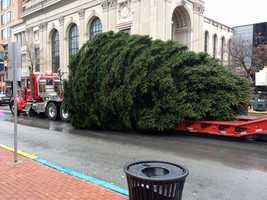 The tree was cut and moved to the square with the help of Jackson Cranes, Kinsley Construction and city crews.