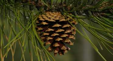 2. Layer in things you love from there. Use pine cones, bird nests, even sea shells.