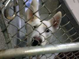 The Adams County SPCA reopened at noon Wednesday after closing earlier this month due to a potential virus outbreak.