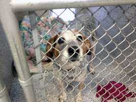 Shelter officials euthanized one dog that tested positive for parvo virus, but the virus did not spread to other dogs.