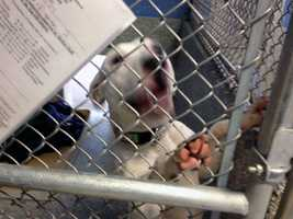 Officials said all dogs in the shelter have been cleared and are healthy.