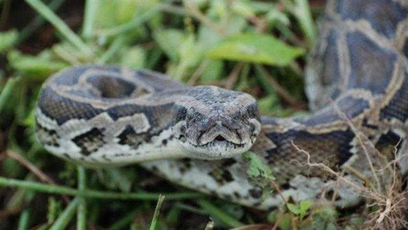 3.31.13 python