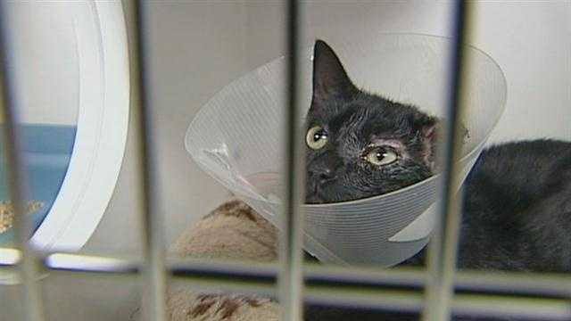 3.8 cat adopted