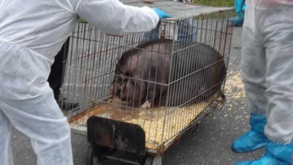An anonymous caller tipped police off to a double-wide trailer in Ephrata Lancaster County that was serving as a home to dozens of animals, including pigs, ducks, birds, ferrets, turtles, rabbits, cats and dogs, according to officials.