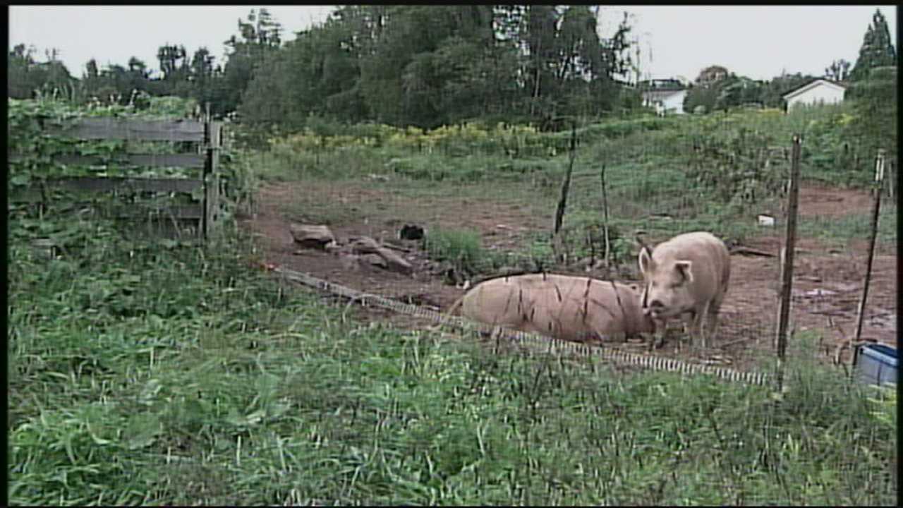 pork prices