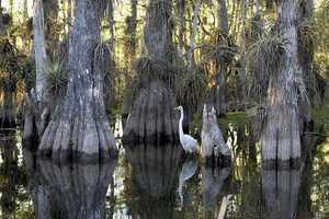 Everglades National Park– Florida: $80,300,000