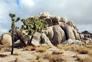 Joshua Tree National Park– California: $90,400,000