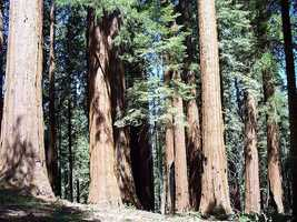 Sequoia National Park– California: $202,800,000 (this figure also includes Kings Canyon)