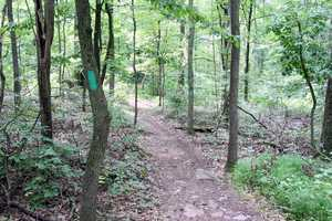 The 5.5-mile Lenape Trail is marked with green blazes.