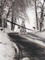 Tree across road in Pequea Township, Lancaster County, Wednesday morning.