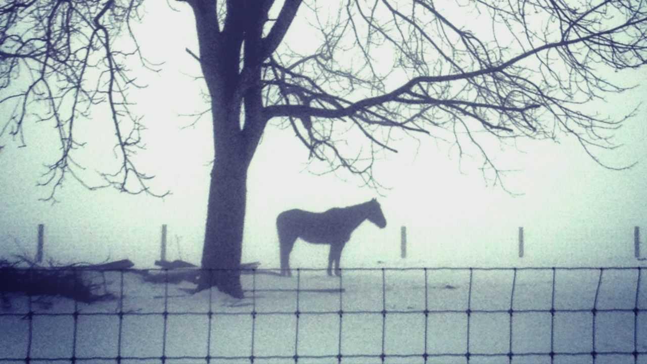 A foggy scene on Friday morning near Strasburg, Lancaster County.