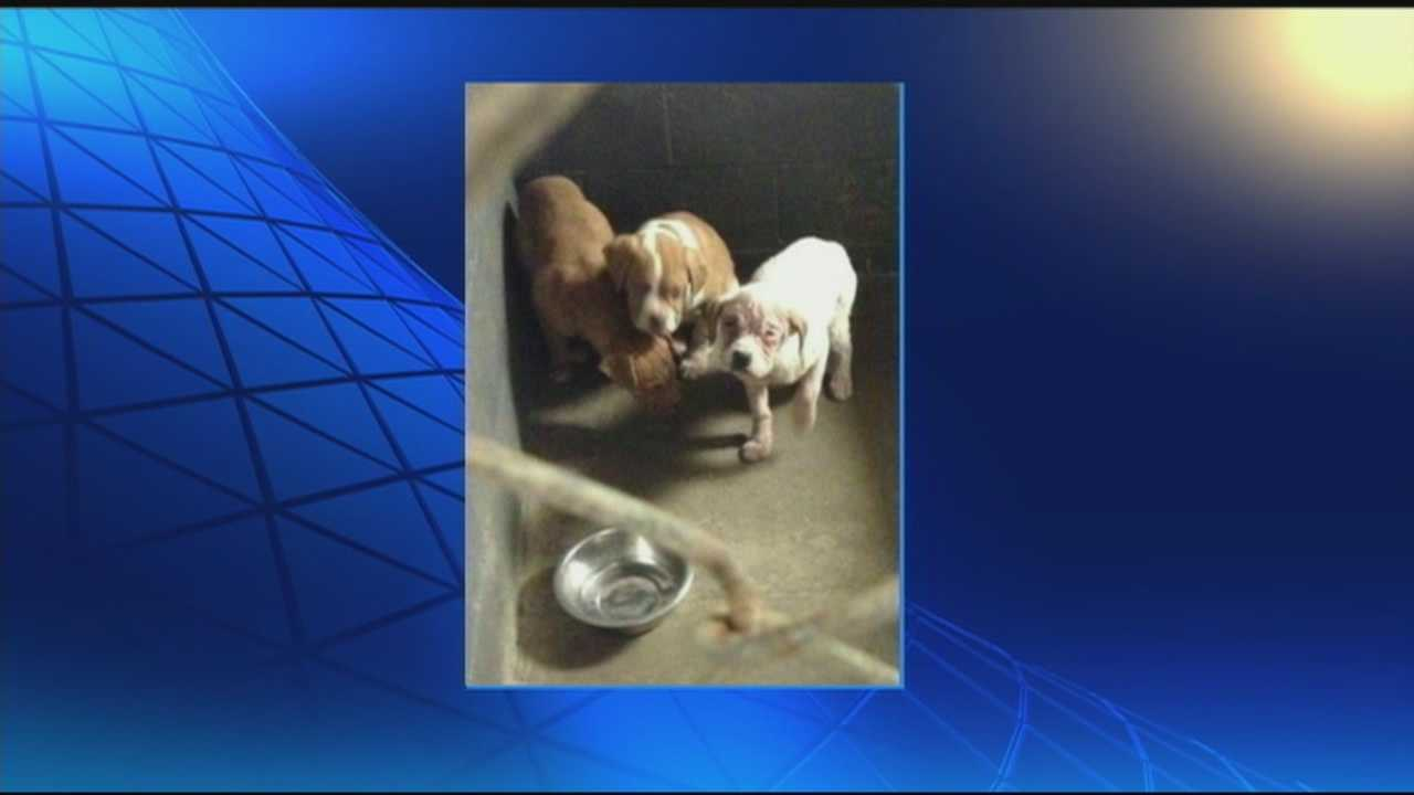 News 8 Today 2.25.14 puppies