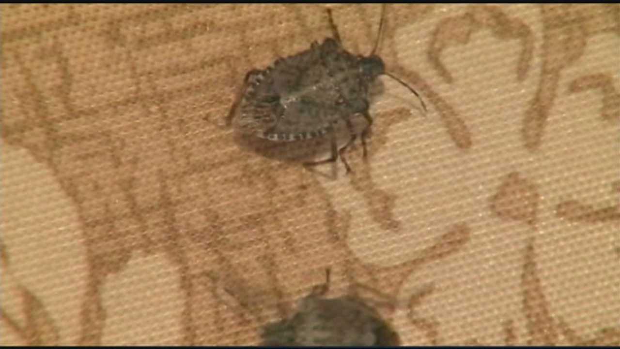 2.27.14 stink bugs
