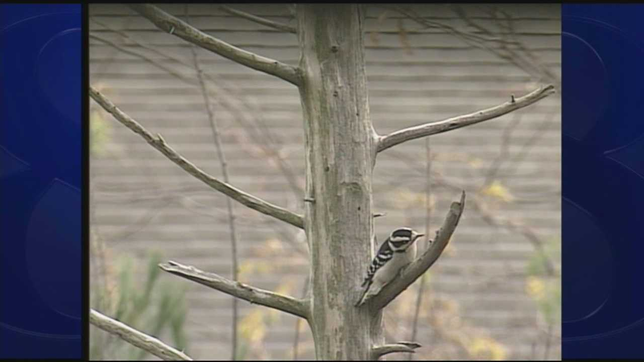 Wild Moments: Woodpeckers 3.28.14
