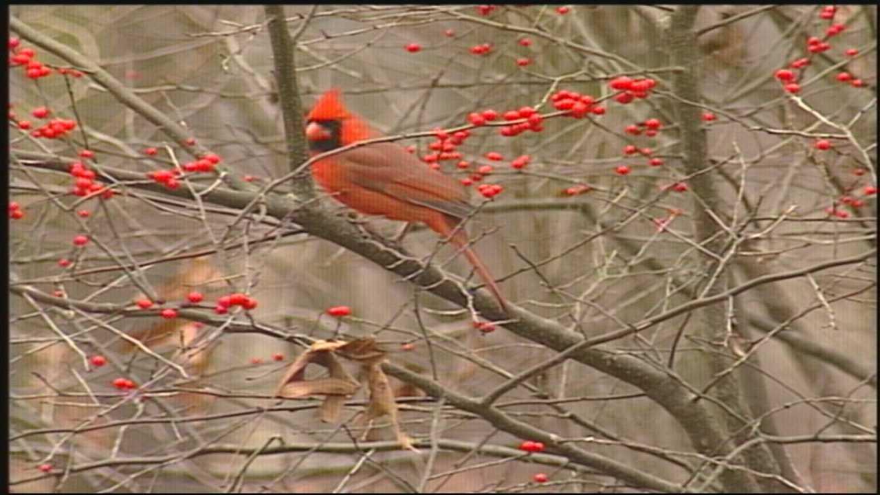 Wild Moments: Bird Bullies 4.4.14