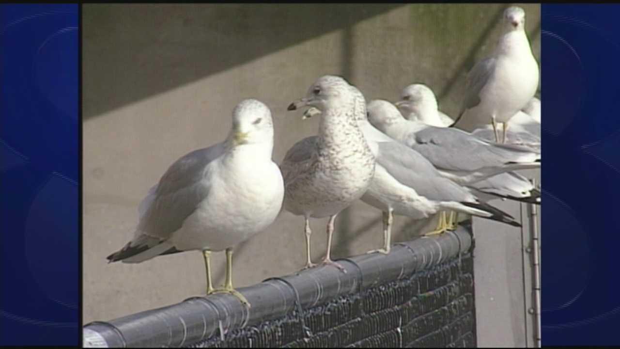 Wild Moments talks Seagulls 5.9.14