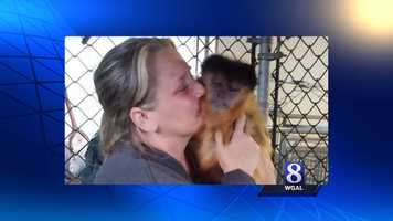 The monkey, named Bug, is now back with its owner.