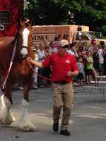 Budweiser has used Clydesdales as a symbol for their company since 1933. They were initially unveiled in a celebration of the repeal of prohibition.